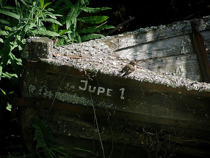 Jupe1