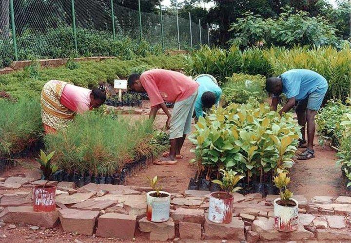 TACARE -yhteisöllisyyttä Kigomassa. Kuva: JGI