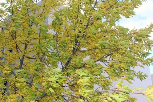 Syksy puista lehdet riipii... Kevättä odotellen.
