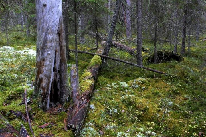 PyhäHäkki_2011_10_09_2374